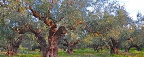 Τα δέντρα μας